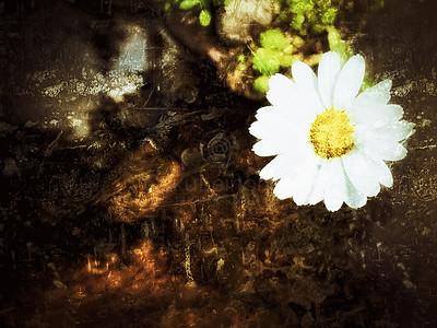 Petals of All Summers