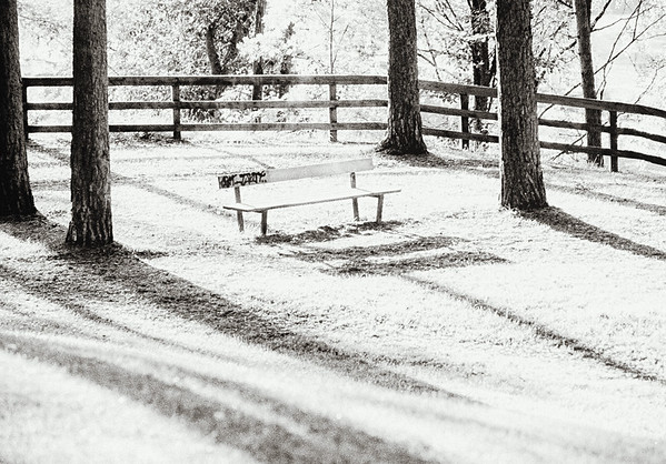 Solitary Bench (Shadows are Long without You)