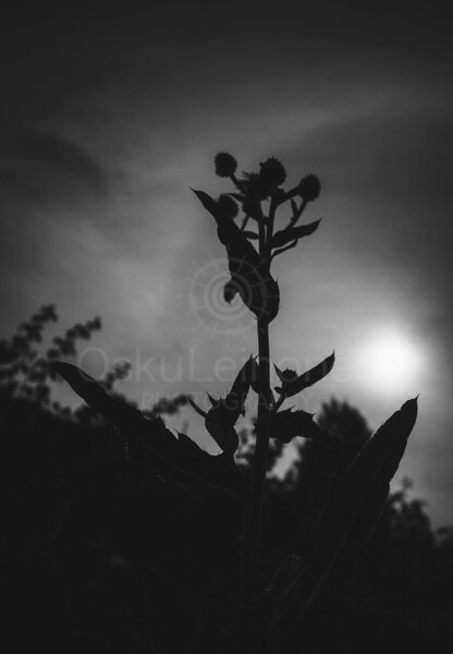 Reaching The Sun I (Plant Silhouette)