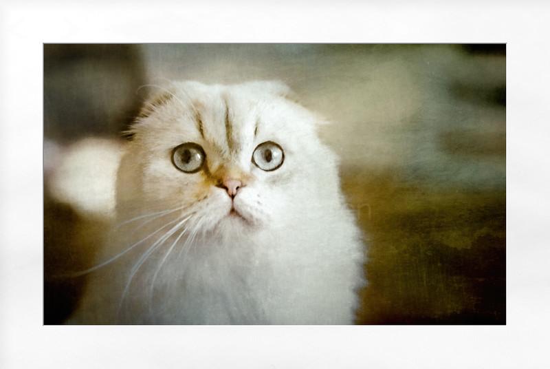 Memories of The Cat