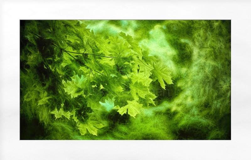 Maple Leaves (Green Nebula)