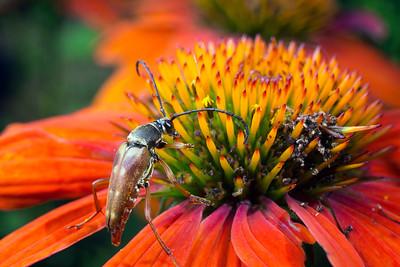 Bug Safari!
