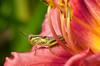 Floral Explorer