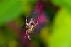 Arachnid amputee