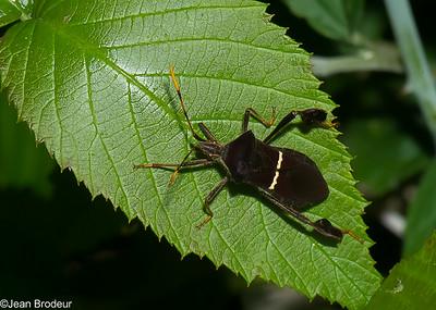 Insectes du Panama, autres familles