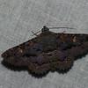 Erebidae, Letis sp.<br /> 5984, Cerro Azul, Panama, 19 juin 2014