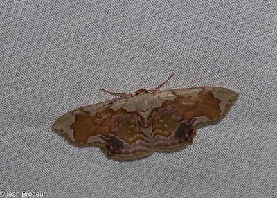 Papillons du Panama;  suite 1