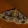 7321, Mount Totumas Cloud Forest, Panama, 26 juin 2014