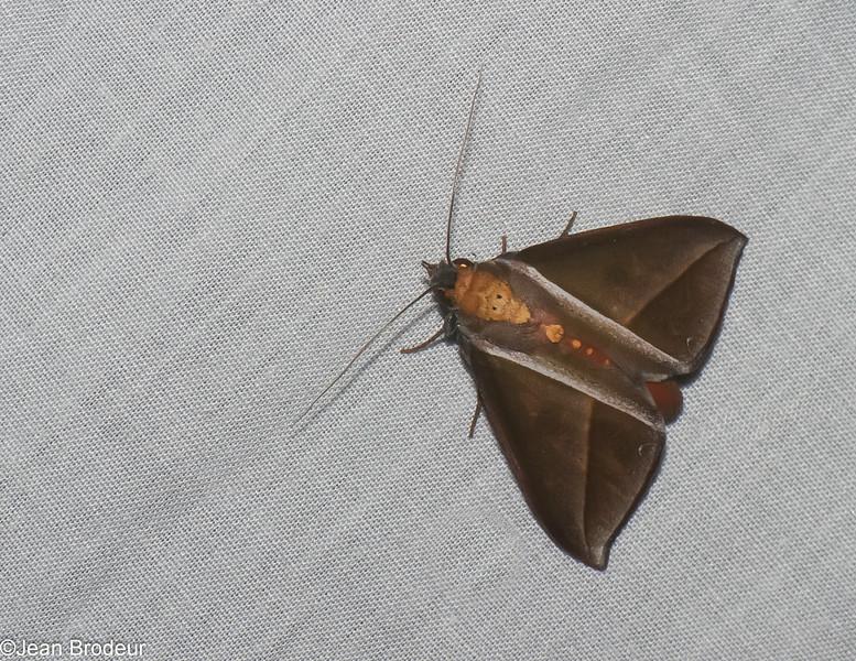 5924, Cerro Azul, Panama, 19 juin 2014