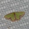 Synchlora expulsata, Geometridae<br /> 5085, Cerro Azul, Panama, 17 juin 2014