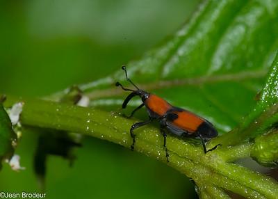 Insectes et araignees d'Equateur