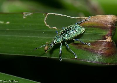Insectes et araignees du Costa Rica