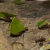 2908, Tapanti National Park, Costa Rica, 15 mars 2015
