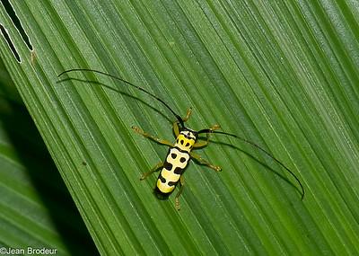 Insectes et araignees du Perou
