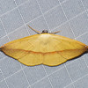 Papillon du Perou<br /> 1175, Amazonia Lodge ,Manu National Park, Peru ,21 septembre 2014
