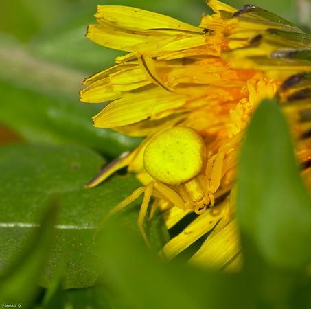 En jaune ; In yellow