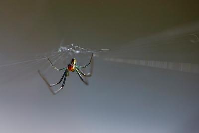 Araignée - couleur