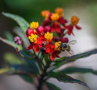 BeeFlowerMacro-2020-10