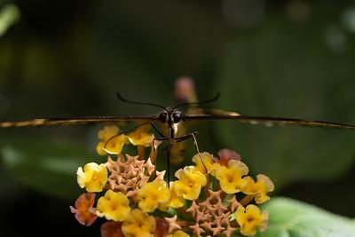 AudubonInsecteriumButterfly-Best-1
