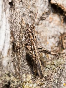 Field Grasshopper 3