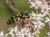 05 July 2012 Hoverfly for ID at Port Solent.