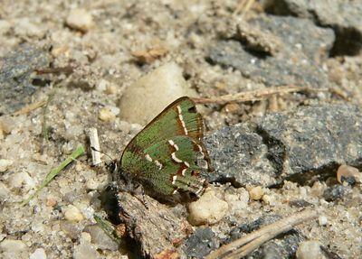 Butterflies 2004-06