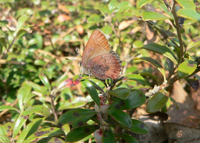 Butterflies in the NJPB
