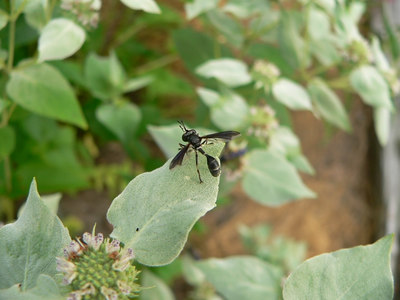 Cool Flies, Believe It Or Not