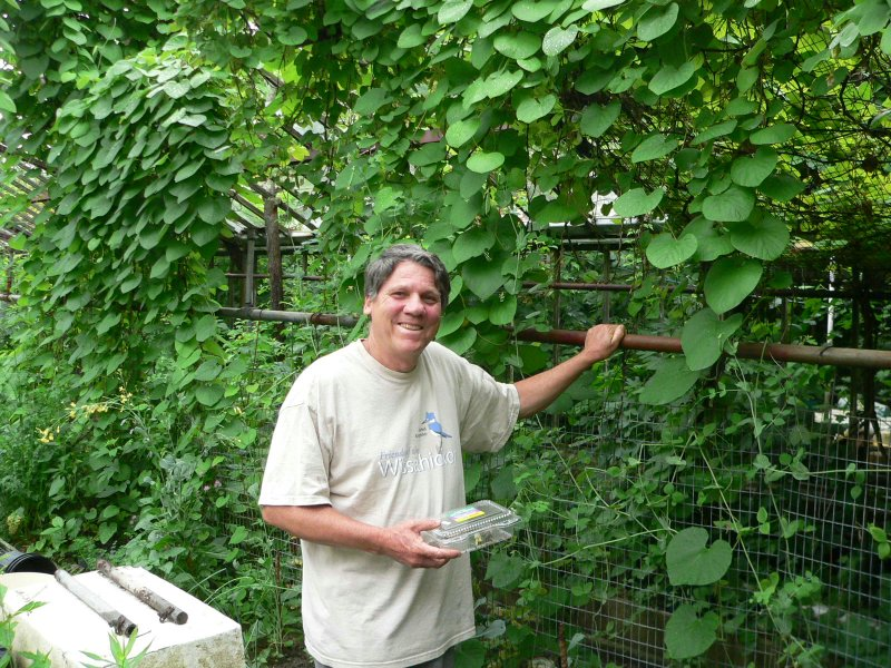 George Basset in his garden in Linwood, where he has lived for 30 years.  Has been raising pipevine swalllowtails for several years.  Pipevines grow here on his fence and elsewhere in his yard.
