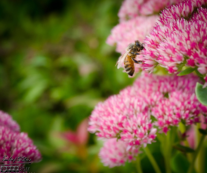 You can see the bee slightly out of focus.