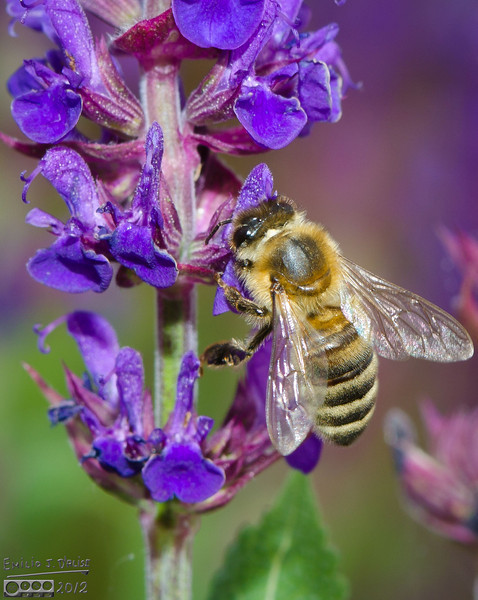 These are probably some of the better pictures of bees I've taken.