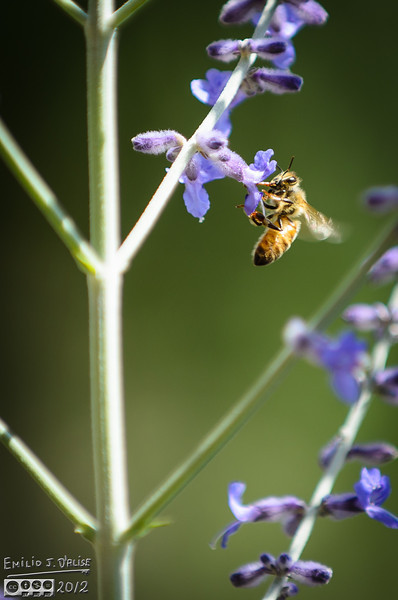 But most of the time, even if at first glance the shot looks good, the little busy bees are blurred.