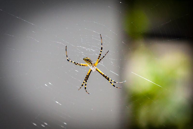 Spider at Prairie Ridge