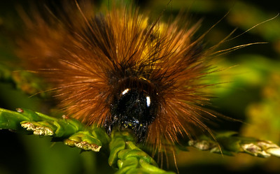 Head of a caterpillar