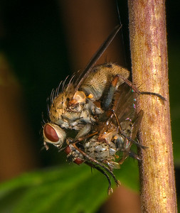 It is a fly eat fly world.