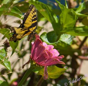 Butterflies Set 2