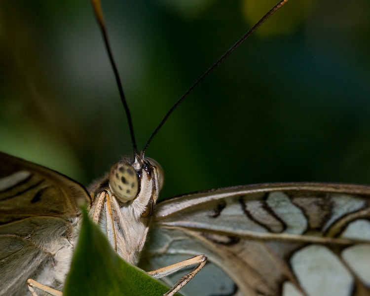Up close and personal with a butterfly
