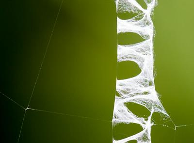 banded garden spider web detail