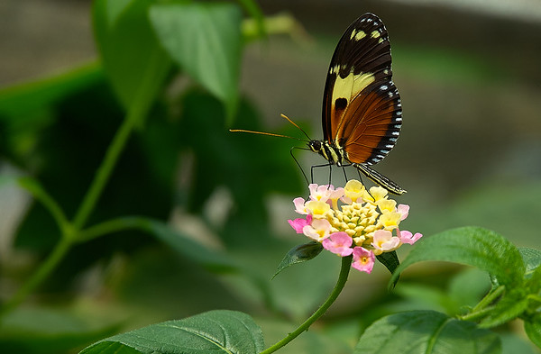 butterfly in quito 1
