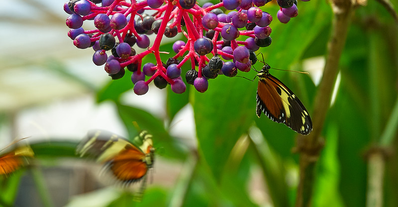 butterfly in quito 2