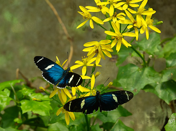 butterflies in quito 2
