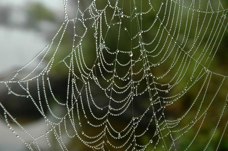 web o' dew by picturesofewe