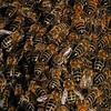 Honey bee nest, May 31st