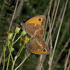 Gatekeeper pair, August