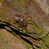 Parasitised spider, November