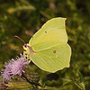 Brimstone, July