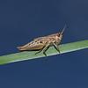 Grasshopper,  September