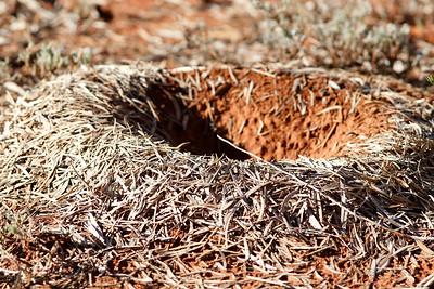 Mulga Ant Nest