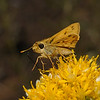 Skipper, October