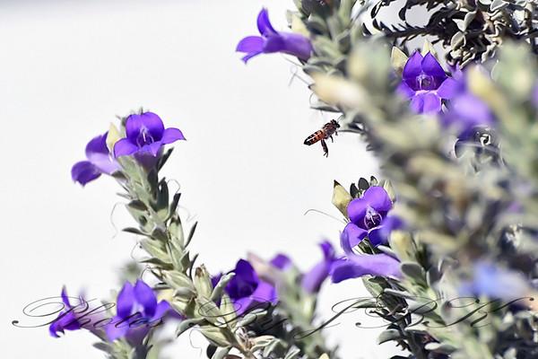 Bees in Phoenix AZ